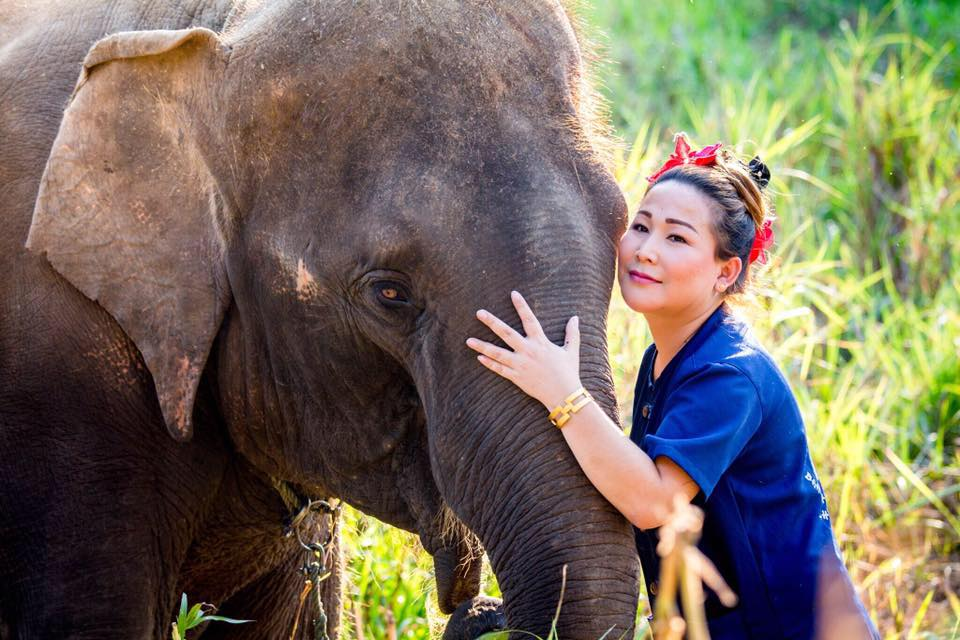 Elephant Sanctuary Park in Chiang Mai (Thailand).