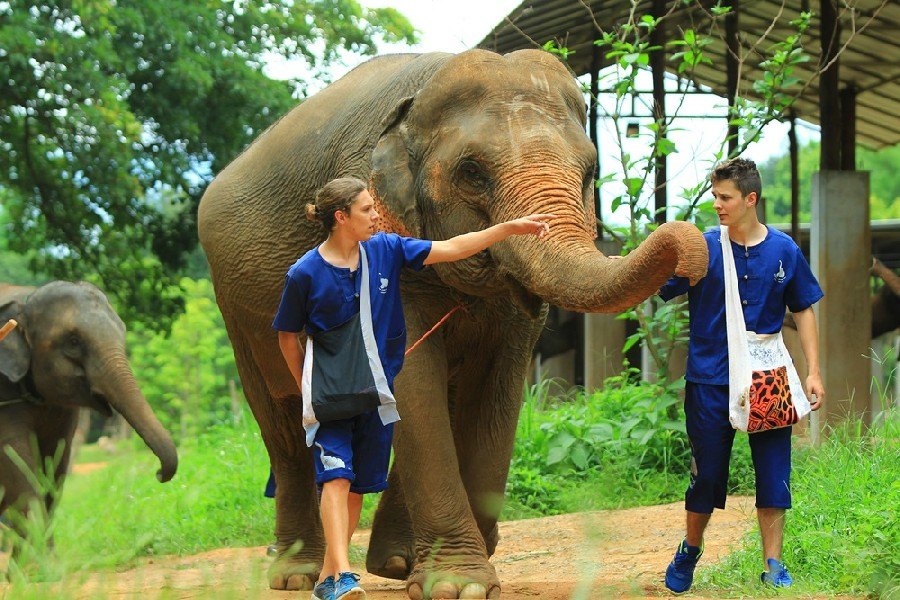Full Day - Elephant's Friend Day